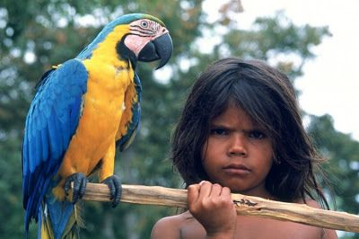 Pássaros do brasil: o canto da arara canide