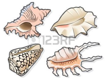 oceaan%3A+Set+van+vier+schelpen%2C+met+behulp+van+de+mix+en+opvulling%2C+vector+illustratie+