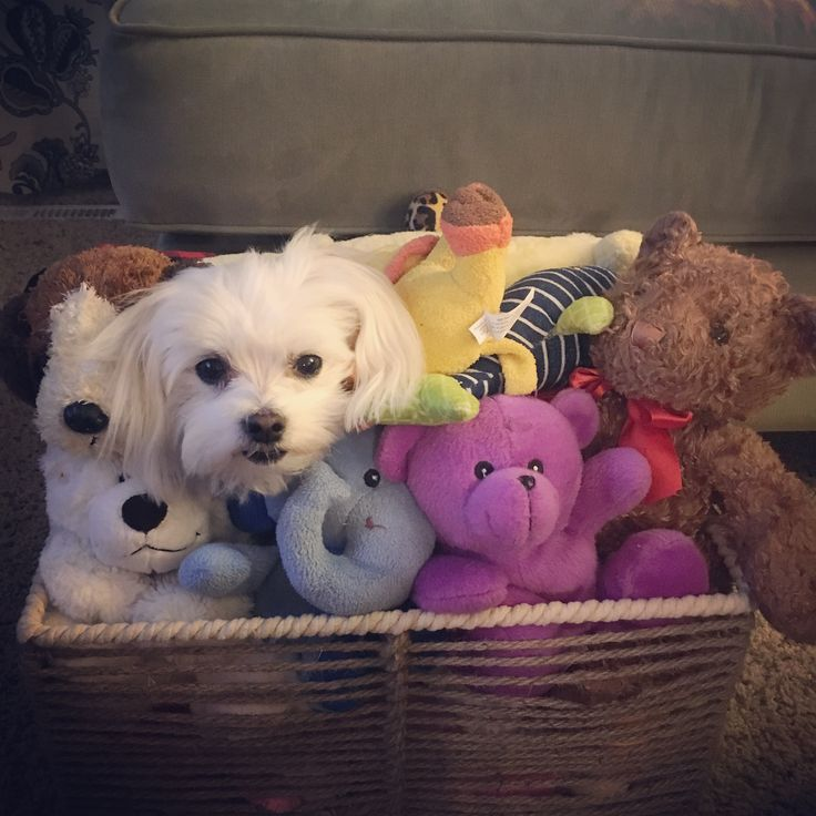 There is one that does not belong. Far too many toys! But I love her