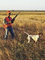 10 Pheasant Hunting Tips