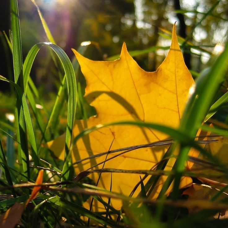 #leaf #leaves #autumn #grass