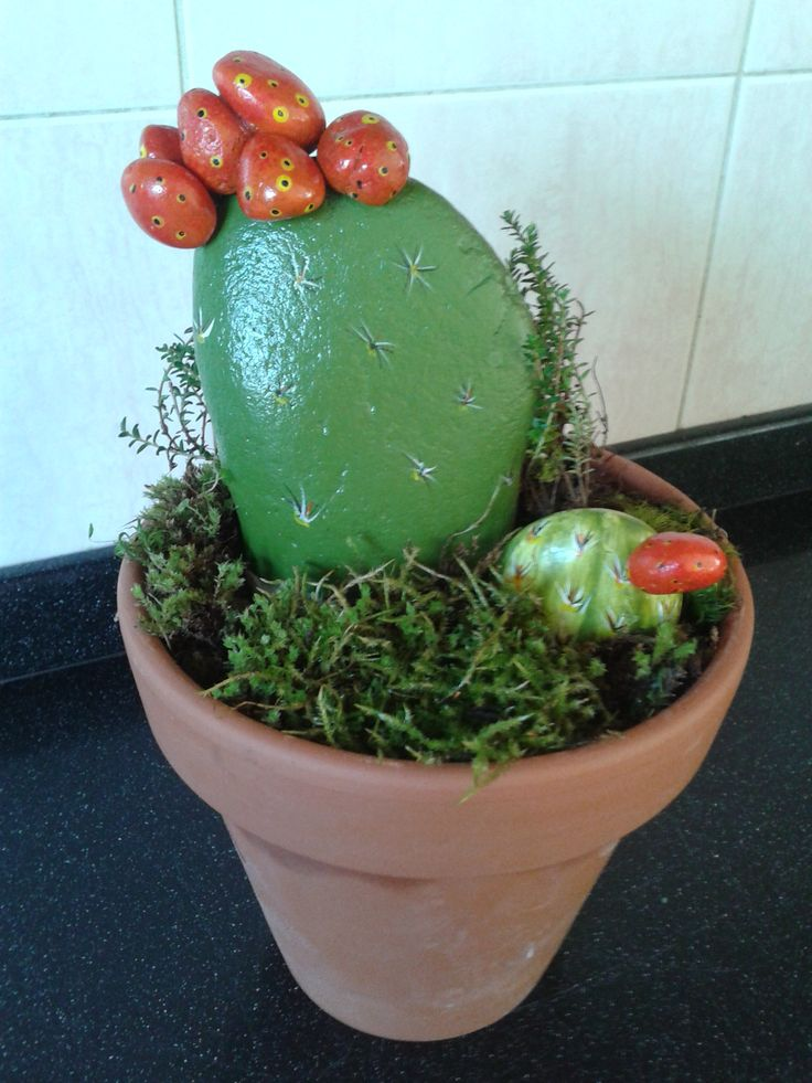 Piedras Pintadas Cactus Jardineria Pinterest Cactus