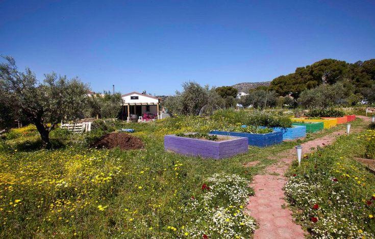 5 αγροκτήματα κοντά στην Αθήνα για βόλτα και ψώνια - Προϊόντα   γαστρονόμος