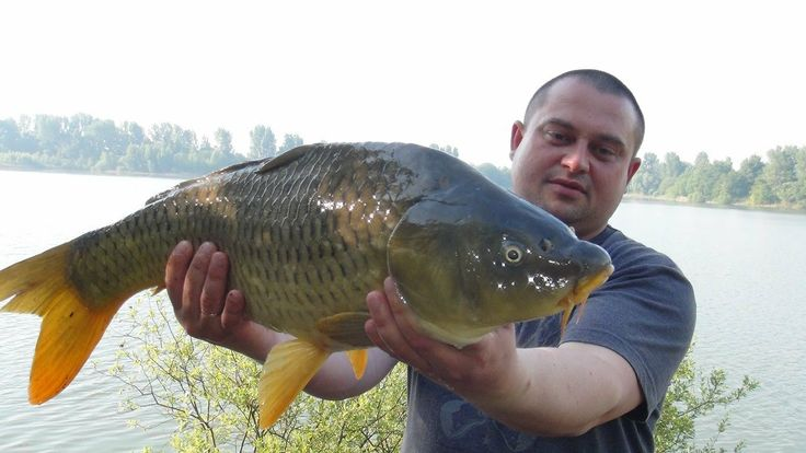 Рыбалка в Германии - 21 Ловля карпа - Fishing For Big ,carpfishing,Peche a la carpe,Captura de carpa,Karpfangeln,Cattura di una Carpa,Caza de carpa,Catching Carp