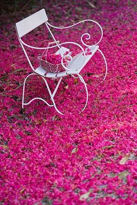 Fallen Rhododendrons at Tregothnan, Cornwall: Little Things, Gardens Photography, Beautiful Places, Beautiful Flowers, Ana Rosa, Pretty Carpets, Beautiful Things, Pink Perfect, Gardens Benches