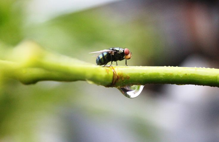 A fly and water on a twig by Yusuf Fahmi Adiputera on 500px