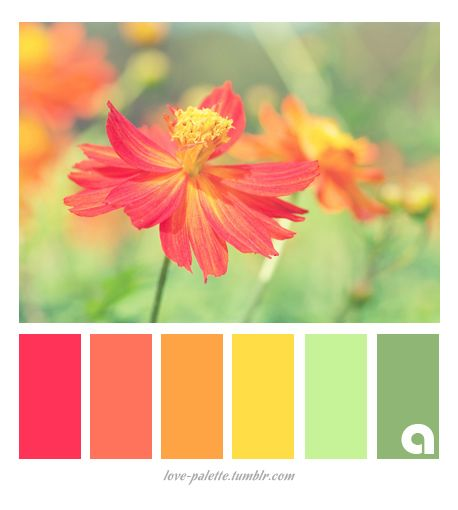 397 best images about ideas de color on pinterest - Paleta de colores valentine ...