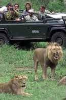 Volunteer Work at Makalali Game Reserve in South Africa | Wildlife Conservation | Big Five Reserve Program