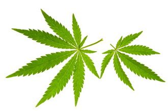 Cannabis Cuisine Attracts Non-Smokers - http://stonerthings.com/cannabis-cuisine-attracts-non-smokers/