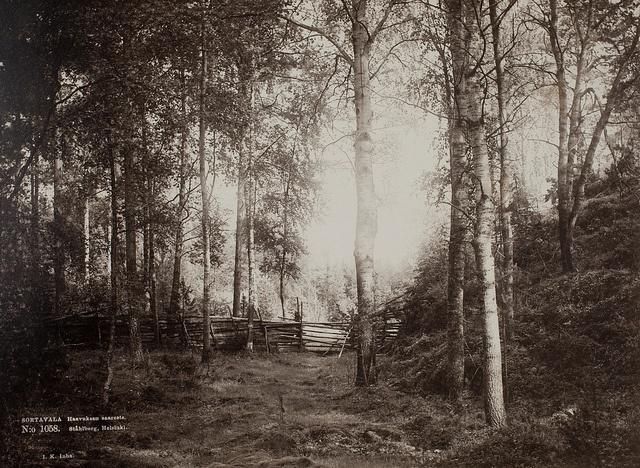 slsa1219_5_16 by Svenska litteratursällskapet i Finland, via Flickr