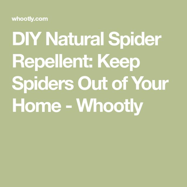 DIY Natural Spider Repellent: Keep Spiders Out of Your Home - Whootly