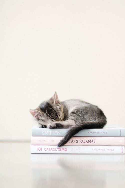 I can't resist collecting cute pictures of #cats and #books.