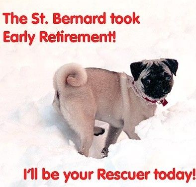 551 best FUNNY PUG DOG MEMES LOL images on Pinterest