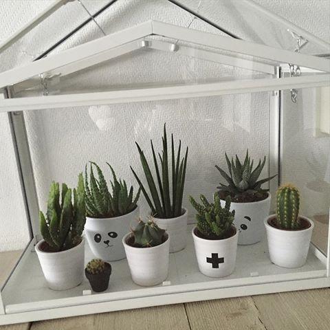 Eerste van de vele foto's met cactussen🌵 #cactus #zwartwit #hout #wonen