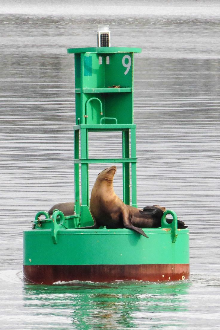 One of the many sea lions on