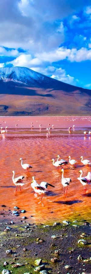 Laguna Colorada, Bolivia The lake contains borax islands, whose white color contrasts with the reddish color of its waters, which is caused by red sediments and pigmentation of some algae.