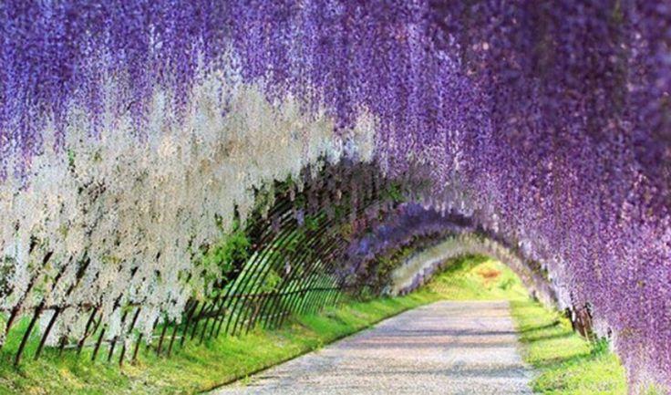 Japonské záhrady sa menia na rozprávku.