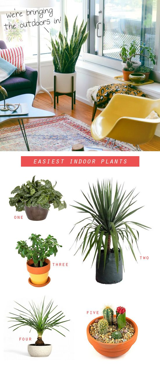 68 best plants that grow in the house images on pinterest for Easy to take care of outdoor plants