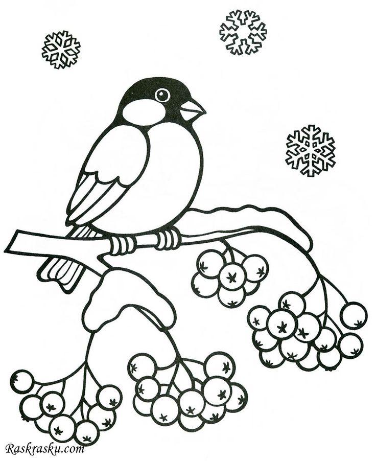 Раскраска Снегирь и рябина