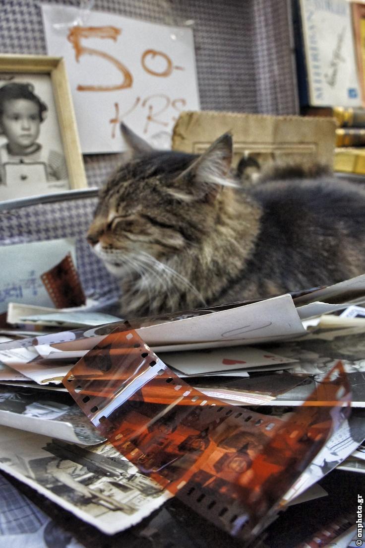 Film and ... Cat!