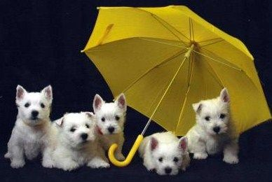 In case it rains... they're prepared.