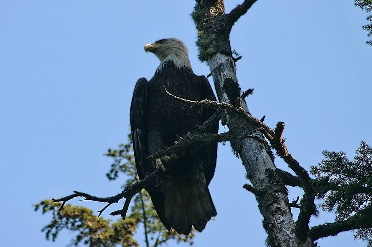 Eagle Photo by Paul Yates -- National Geographic Your Shot