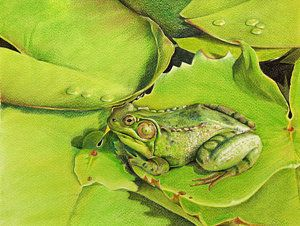 Green Frog Painting - Vert Grenouille by Marielle Teasdale