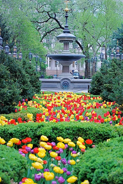 The MOULD FOUNTAIN and Spring Flowers in City Hall Park, NYC: Cities Hall, Water Fountain, Spring Flowers, York Cities, Beautiful Flowers, Hall Parks, Red Tulip, New York, Moulding Fountain