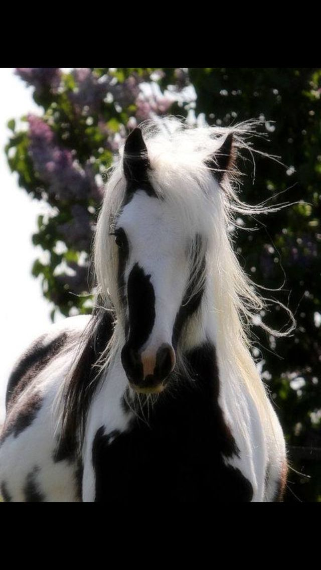 Love this paint horse paints are my fav breed but I love all horses perf.