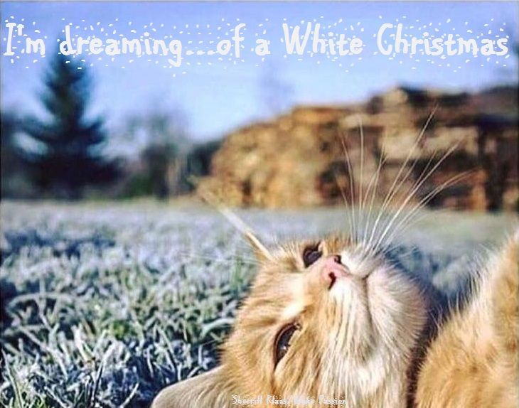 I'm dreaming of a ...& Stephen sings about a... #WhiteChristmas #Youtube https://youtu.be/J_7AXKl_XtE  #White #snow #Christmas #music #AClassicChristmas  #Blake #StephenBowman #dreams #carols #TheBandBlake