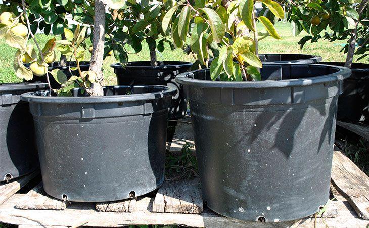 48 Best Images About Extra Large Pots On Pinterest Plant 400 x 300
