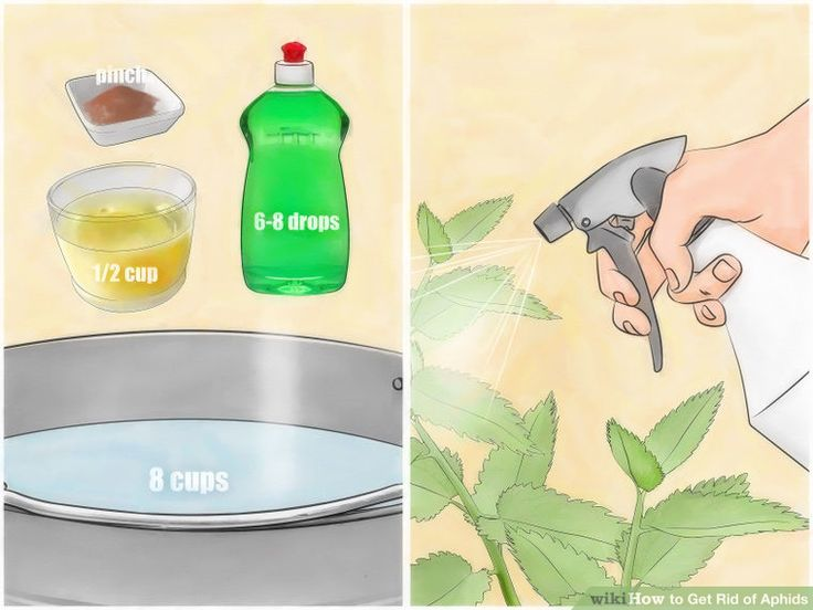 Image titled Get Rid of Aphids Step 8