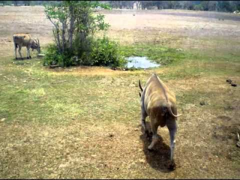 #LaVan200 en el Parque Zoológico Nacional de Cuba