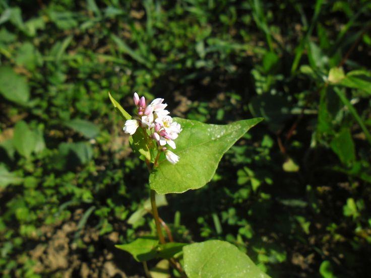 Principais doenças e a sua prevenção da Varroa,  Nosema,loque americana http://apicosta.com/como-prevenir-as-doencas-na-apicultura-varroa-nosema-loque-americana/