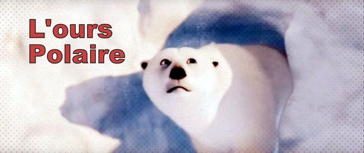 L'ours Polaire Documentaire Jeunesse