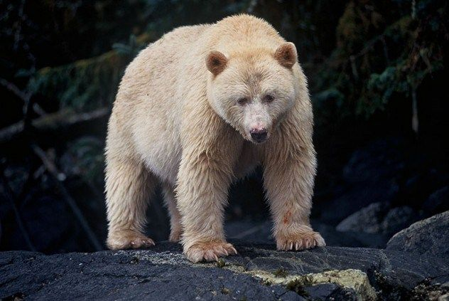 10 Fascinating Facts About Bears