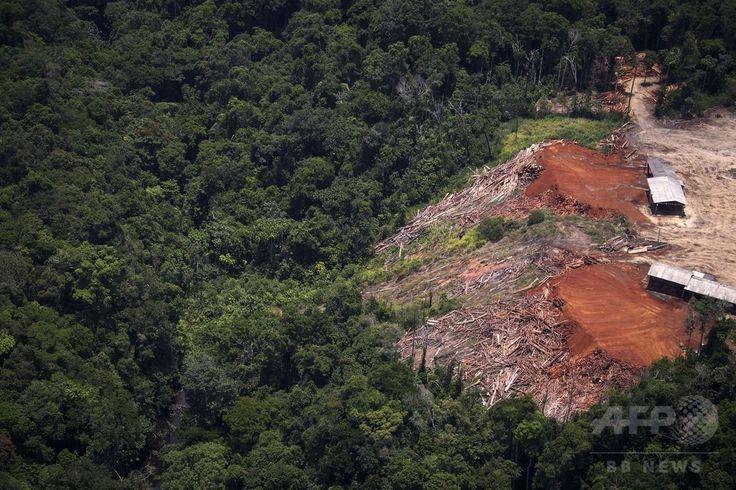 ブラジル・パラ(Para)州のアマゾン(Amazon)熱帯雨林で行われている違法伐採の現場の上空から撮影した、オダミ(Odami)と呼ばれる製材所(2014年10月14日撮影)。(c)AFP/Raphael Alves ▼16Oct2014AFP|上空から見たアマゾンの違法伐採現場 http://www.afpbb.com/articles/-/3029095 #Illegal_logging #Para_Brazil