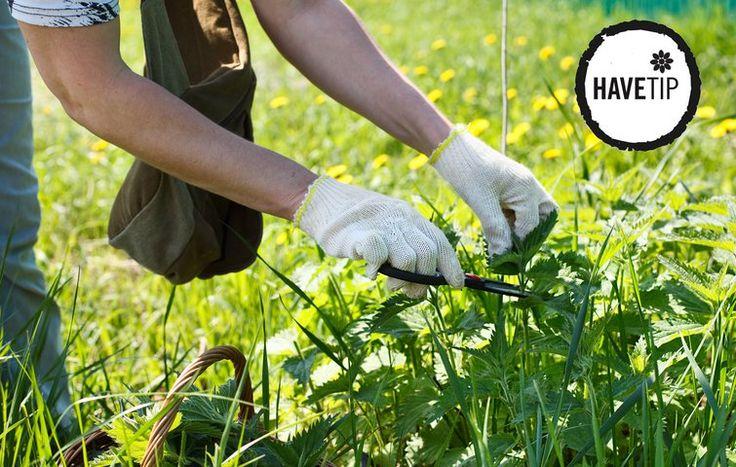 Begynd tidligt på året med at fjerne ukrudt i blomsterbede. Jo mindre rodnet, de når at danne, jo nemmere er ukrudtet at få op.