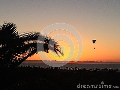 A man is flying a glider in the sky of San Diego at the time of Sunset. Many people are watching sunset at this time. The sky is turning golden yellow. I was shoot a photo by a palm tree above the pacific ocean.