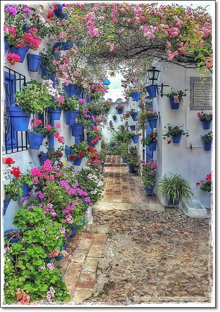 """Cordoba's annual Patio Festival is May 8th-19th, 2013.  See Spain on Facebook describes the streets as """"filled with the sounds of flamenco and the scent of jasmine and orange blossoms.""""  España"""