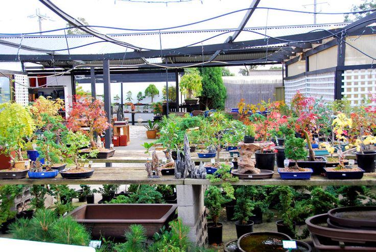 Orient Bonsai Nursery 11 Mahoneys Road Reservoir VIC 3073, Australia