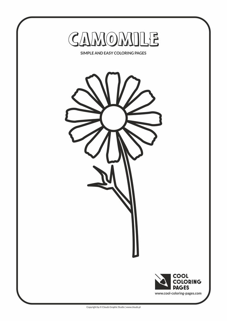 simple and easy coloring pages for toddlers camomile