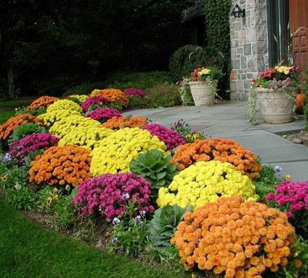 8 Best Images About Yard Ideas Perennial Flowers On