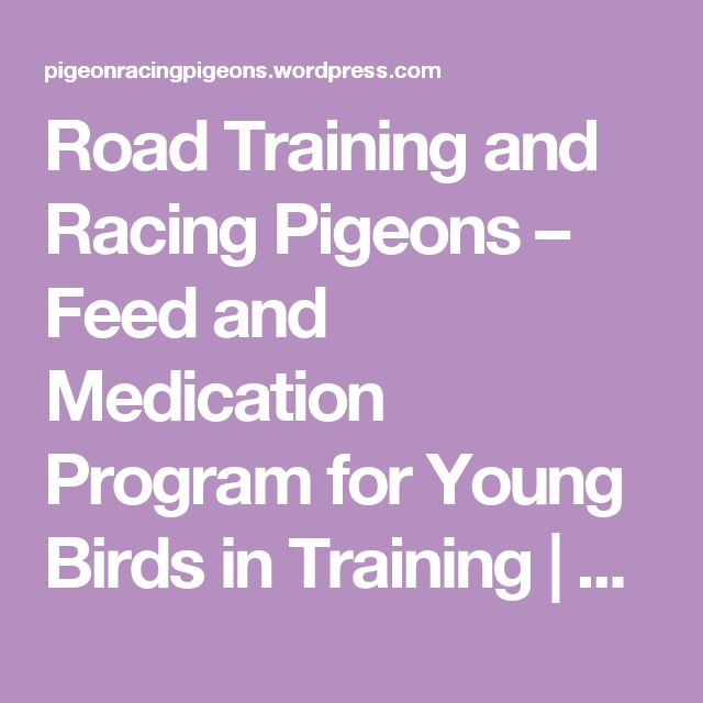 Road Training and Racing Pigeons – Feed and Medication Program for Young Birds in Training   Pigeon Racing Pigeons