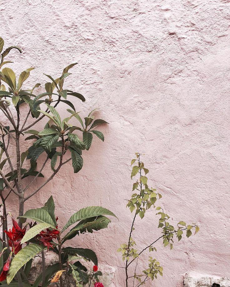 Pink Inspiration plants on pink