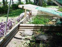How to Build a Basic Outdoor Tortoise Pen (for Steve of course!)