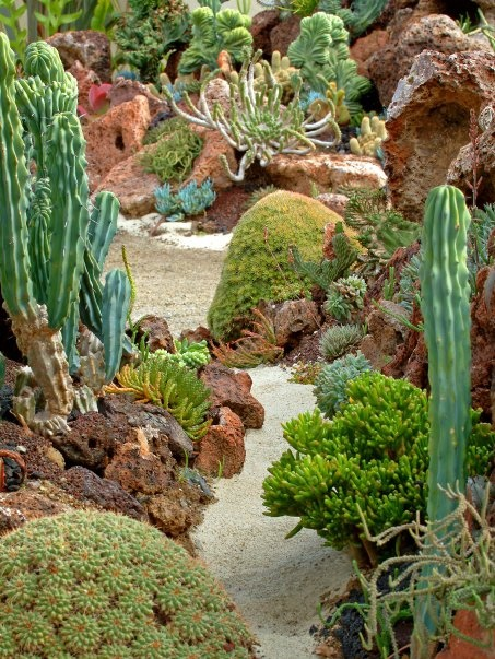 coral reef succulent garden with sand