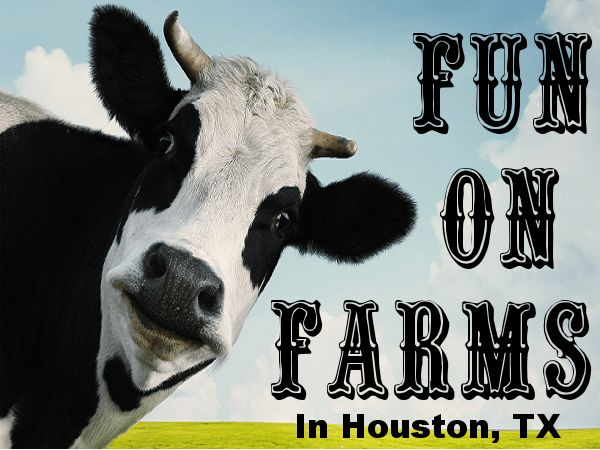 Fun on Houston area Farms!  Farms are a fun thing to do with kids in Houston!