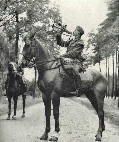 war horse deutsch