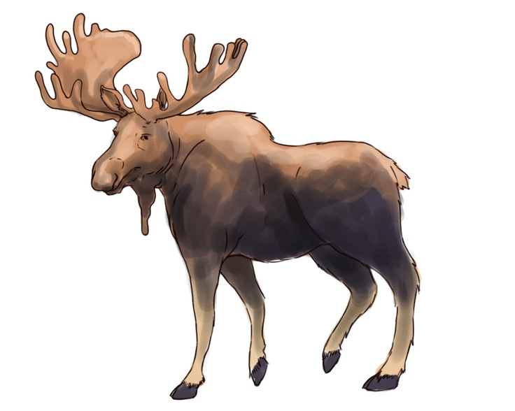 How to Draw a Moose.  This could come in handy!